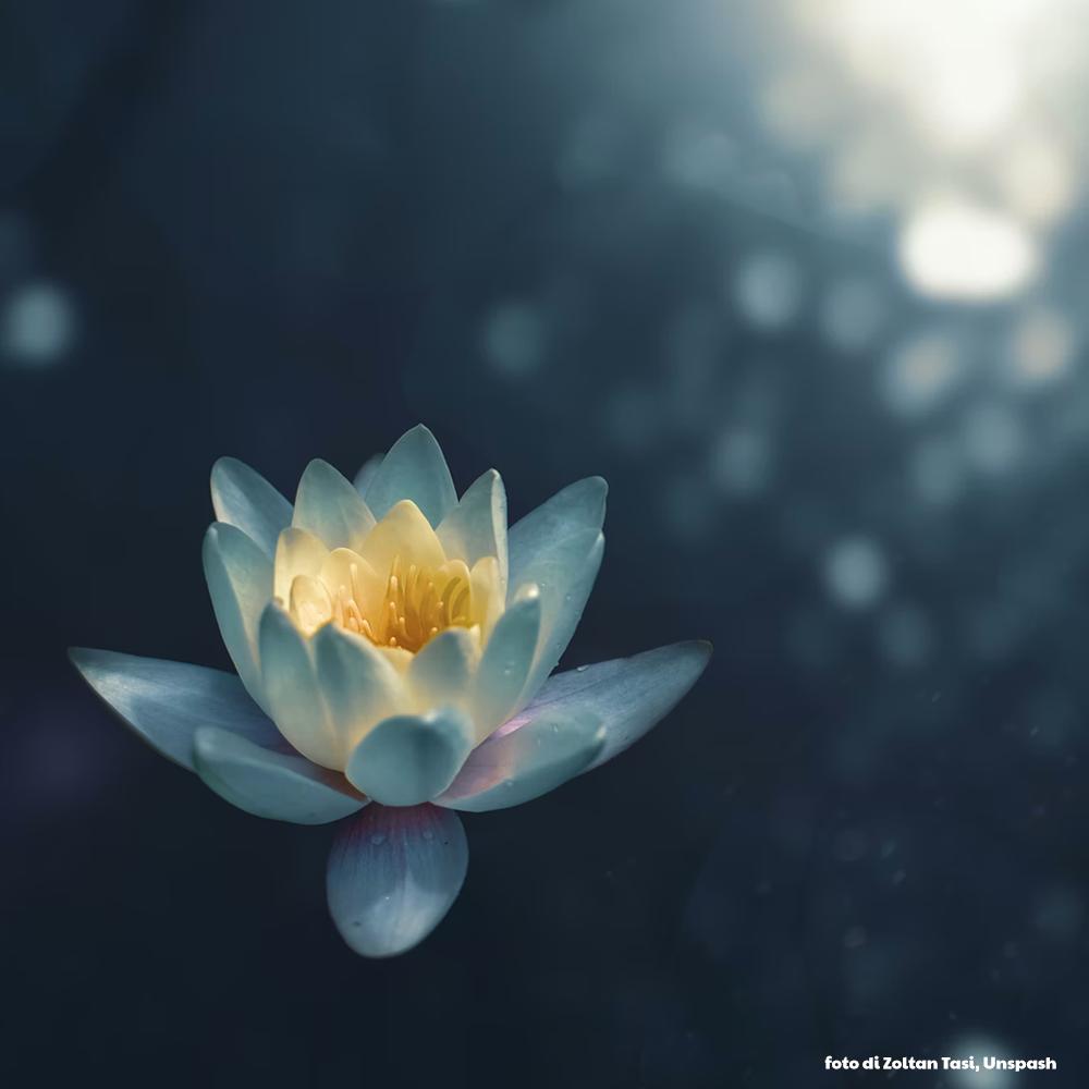 pratiche audio di mindfullness foto di Zoltan Tasi Unsplash